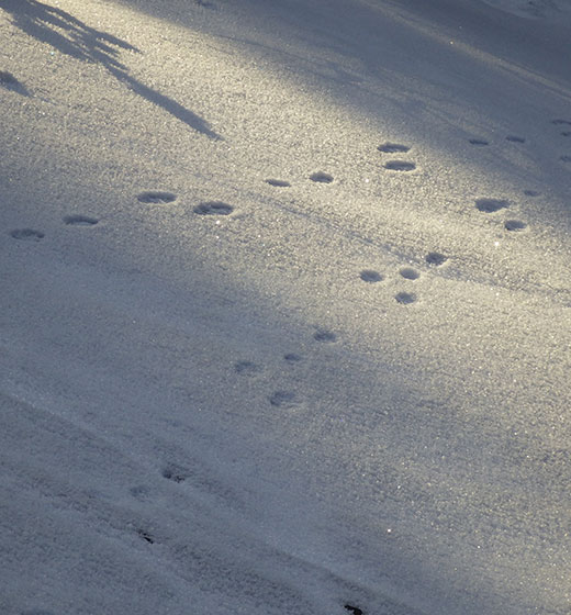 Image: Traces on snow